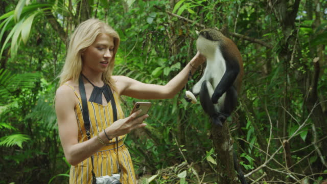 tourist woman posing for cell phone selfie with monkey / grand etang national park, grenada - differential focus stock videos & royalty-free footage