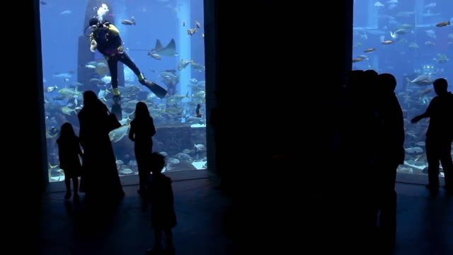 vídeos y material grabado en eventos de stock de ws tourists and diver in atlantis aquarium / dubai, united arab emirates - atlantis