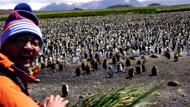 tourists are taking photos of penguins in southern georgia - remote location video stock e b–roll