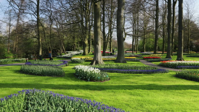 vidéos et rushes de tourists at keukenhof gardens, lisse, south holland, netherlands, europe - parterre de fleurs