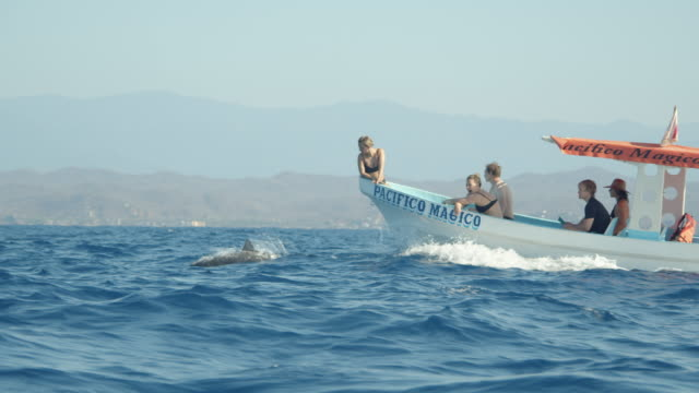 tourists contemplating spinning dolphins from a boat. mazunte zipolite, pacifico coast at oaxaca state, mexico - cetacea stock videos & royalty-free footage