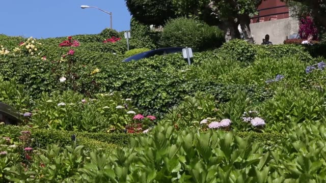 ms tourists drive down lombard street on may 20 2014 in san francisco california the san francisco municipal transportation agency board of directors... - lombard street san francisco stock videos & royalty-free footage