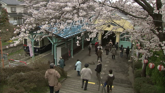 Tourists enjoy the display of blooming Yoshino cherry trees.