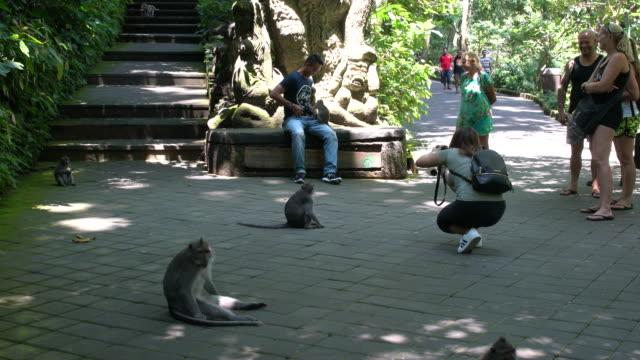 tourists enjoying the balinese long-tailed monkey at the ubud monkey forest, ubud, indonesia - ubud stock videos & royalty-free footage