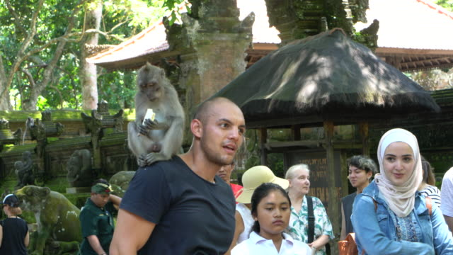 tourists enjoying the balinese long-tailed monkey at the ubud monkey forest, ubud, indonesia - nature reserve stock videos & royalty-free footage
