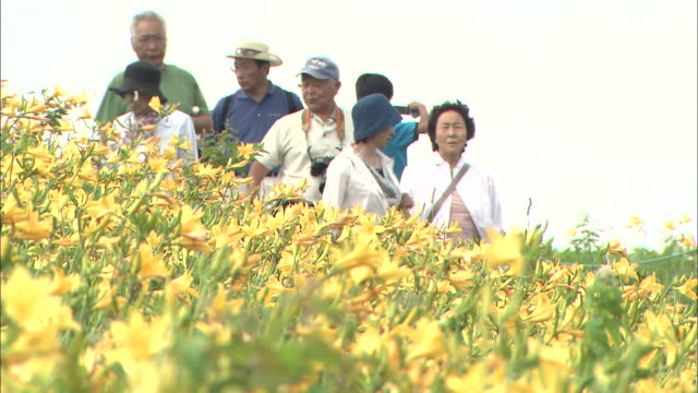 tourists gaze at fields of blooming daylilies in japan's kirigamine highlands. - 中年の女性点の映像素材/bロール