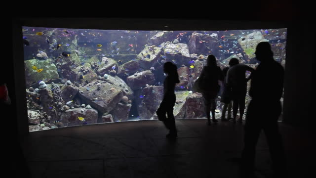 WS Tourists in Atlantis Aquarium / Dubai, United Arab Emirates