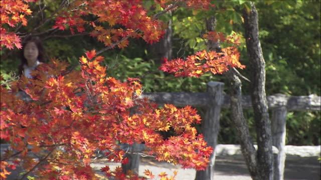 tourists in background walk by autumnal foliage on trees, nikko, tochigi - 市街地の道路点の映像素材/bロール