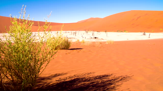 ws tourists in the dead vlei - namibian desert stock videos and b-roll footage