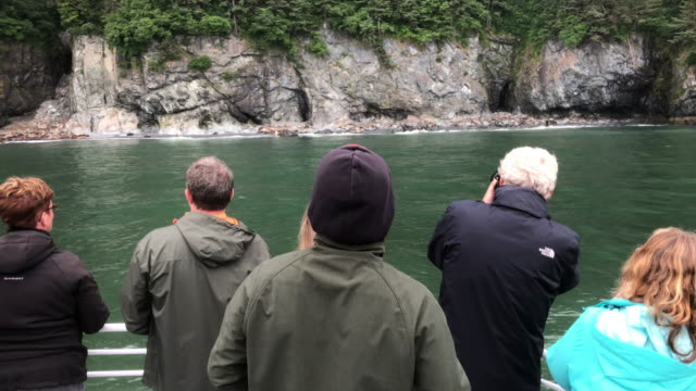 tourists looking at sea lions from a tour boat in alaska . - sea lion stock videos & royalty-free footage