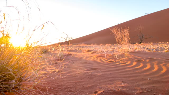 ds ws tourists on sand dunes in the namibian desert - namibian desert stock videos and b-roll footage