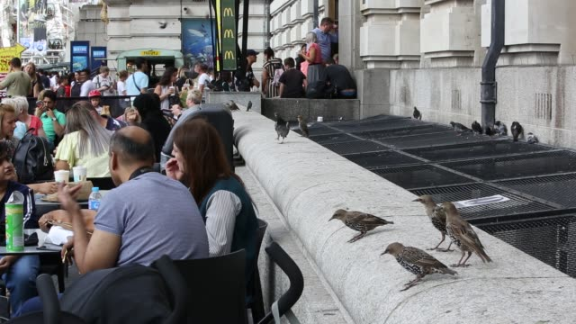 tourists outside a cafe on the south bank with pigeons and starlings scavenging food london uk - scavenging stock videos & royalty-free footage