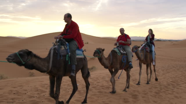 tourists riding camels from the village of merzouga to a tourist camp into the dunes of erg chebbi, saharan morocco - tiergruppe stock-videos und b-roll-filmmaterial