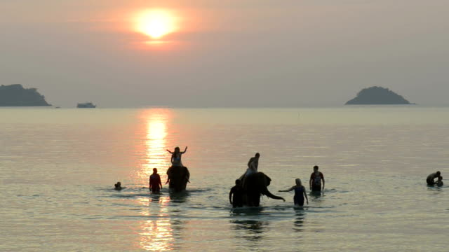 tourists riding on elephants in the sea at sunset - trat province stock videos and b-roll footage