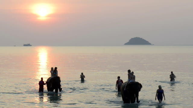 tourists riding on elephants in the sea at sunset - arbeitstier stock-videos und b-roll-filmmaterial