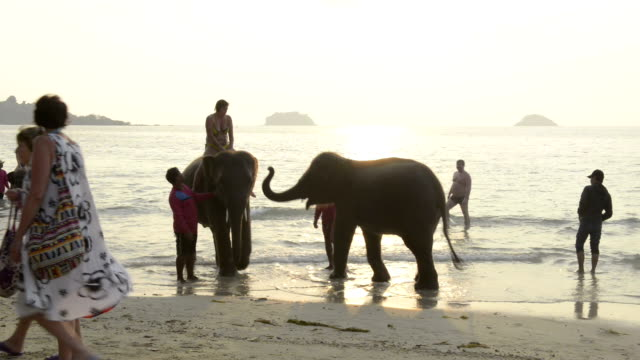 tourists riding on elephants on the beach at sunset - arbeitstier stock-videos und b-roll-filmmaterial