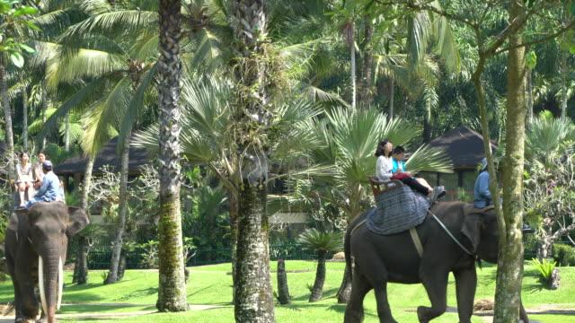 Tourists Riding Rescued Sumatran Elephants In Bali, Indonesia