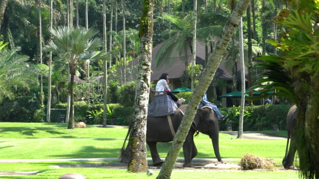 Tourists Riding Rescued Sumatran Elephants In Bali, Indonesia