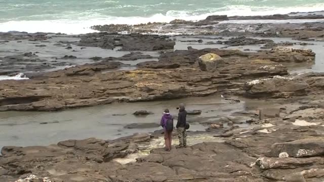 vídeos de stock e filmes b-roll de tourists standing on rocky coastline and taking photographs in the catlins in southland new zealand - vista geral
