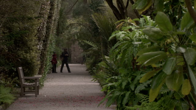 tourists stroll on a paved path through tropical plants at tresco abbey gardens on the isle of scilly. available in hd. - isles of scilly stock videos & royalty-free footage