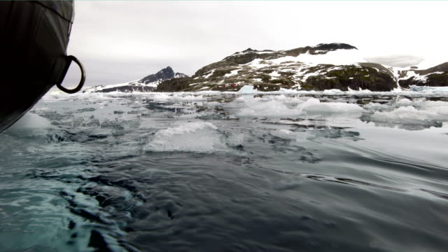 tourists studying the icebergs in cierva cove antarctica - biologist stock videos & royalty-free footage