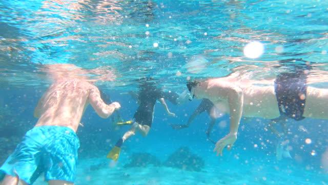vídeos de stock, filmes e b-roll de turistas nadam na área protegida do mar vermelho. egito. - ecoturismo