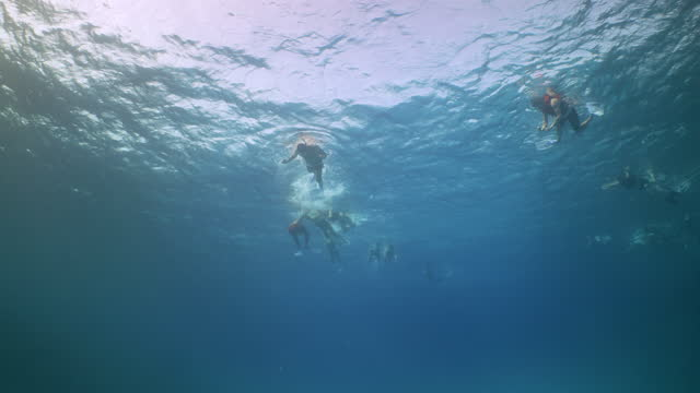 tourists swimming with dolphins over red sea reef - red sea stock videos & royalty-free footage