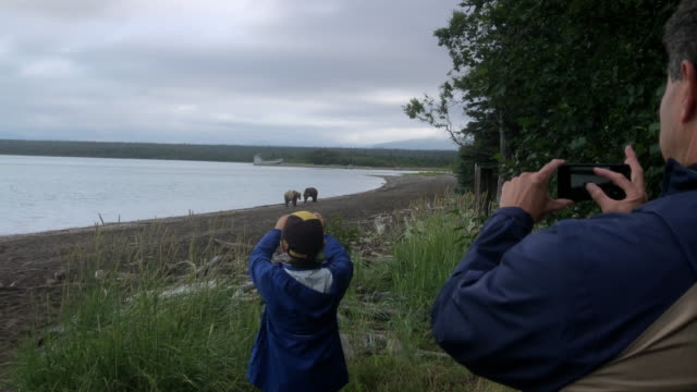 tourists taking pictures of brown bears at the beach in katmai national park - walking in water stock videos & royalty-free footage