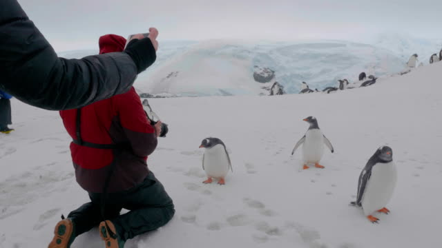 tourists taking pictures to penguins in antarctica - antarctica people stock videos & royalty-free footage