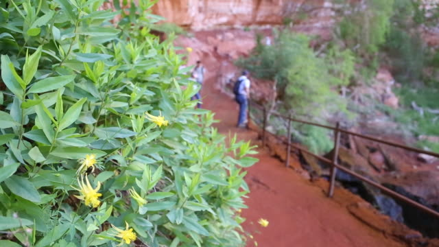 Tourists visit the Emerald Pools in Zion National Park, Utah.