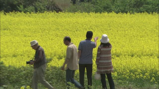 tourists visit vivid fields of blooming rape flowers in akita, japan. - 鳥海山点の映像素材/bロール