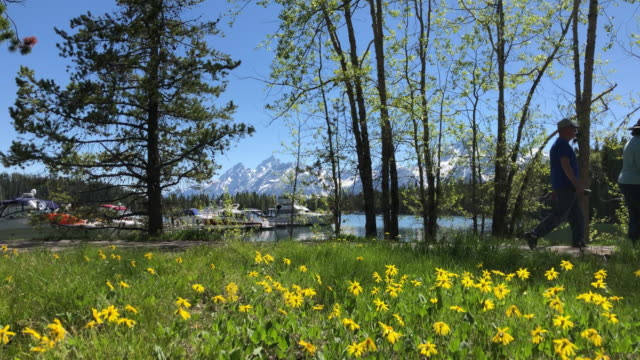 tourists visiting grand teton area in wyoming, usa. - grand teton stock-videos und b-roll-filmmaterial