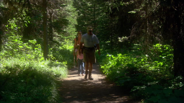 tourists walk along a forest path in glacier national park, montana. - glacier national park us stock videos and b-roll footage