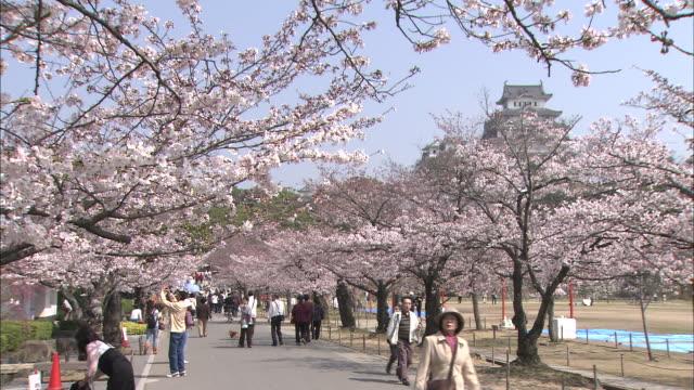 tourists walk along a sidewalk lined with blossoming cherry trees in japan. - von bäumen gesäumt stock-videos und b-roll-filmmaterial