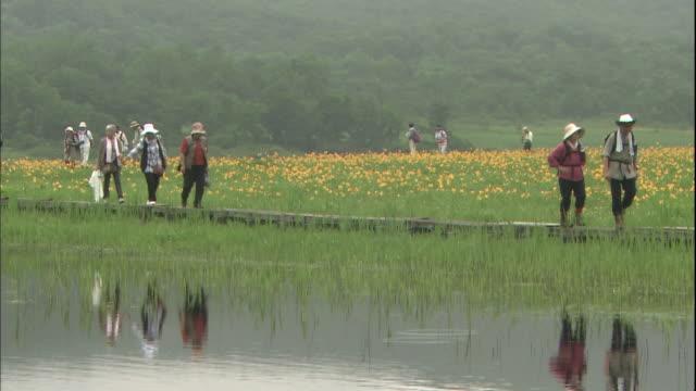 tourists walk around at the community of daylily in fukushima-ken kitashiobara-mura, japan. - ワスレナグサ点の映像素材/bロール
