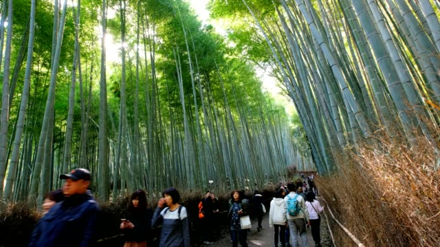 Tourists walking in bamboo forest with sunlight at Arashiyama, Kyoto, Japan