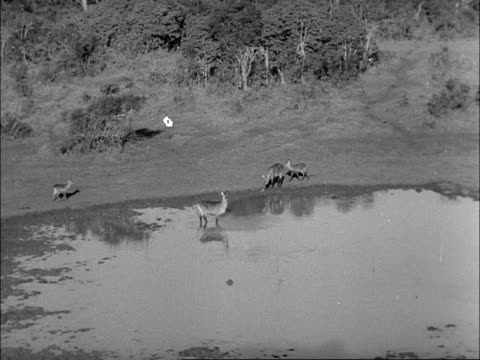 Tourists watch wild animals at a watering hole from the observation deck at the Treetops hotel in Kenya 1953