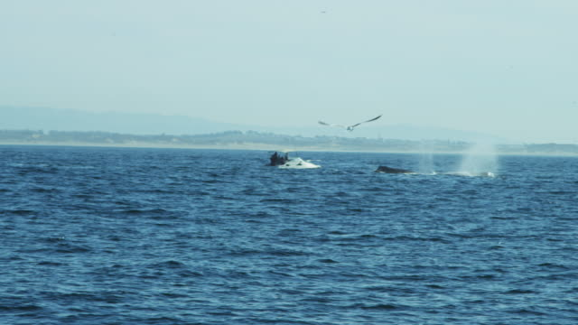 Tourists Whale watching Humpbacks ocean Pacific California USA