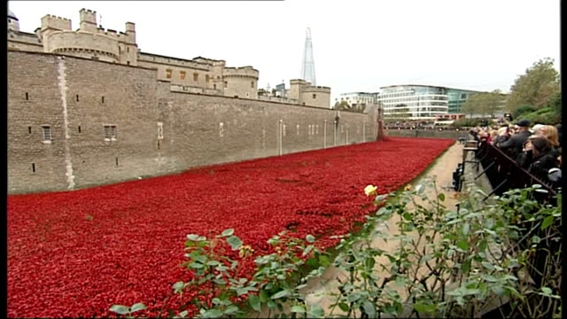 tower of london poppy installation creators receive mbe awards various of moat filled with ceremaic poppies as people look on - moat stock videos & royalty-free footage