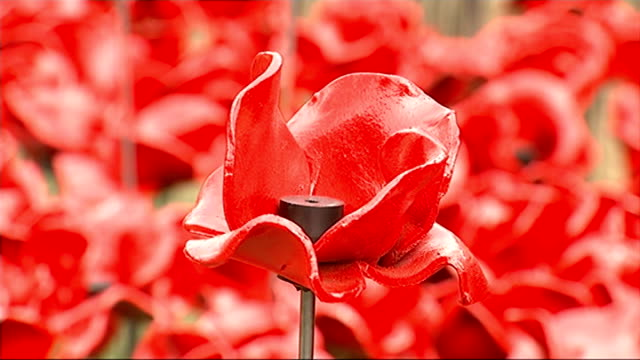 tower of london poppy installation creators receive mbe awards tower of london various of moat filled with ceremaic poppies - moat stock videos & royalty-free footage