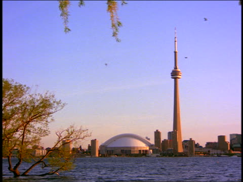 CN tower + Skydome on shores of Lake Ontario / tree in foreground / Toronto, Canada