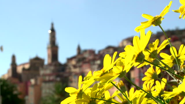 town of menton with yellow flowers change focus - cote d'azur stock videos & royalty-free footage