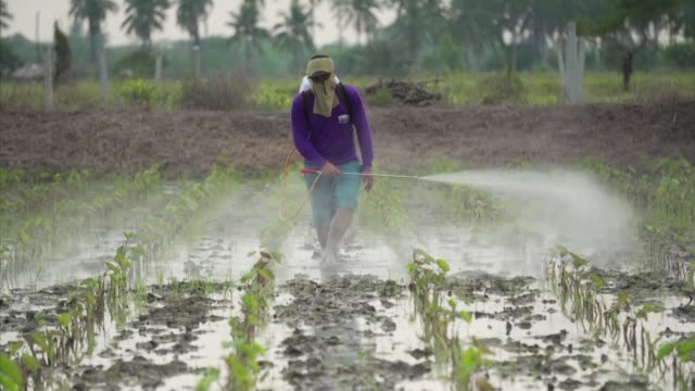 vídeos de stock e filmes b-roll de a toxic weedkiller linked to parkinson's disease and banned in more than 30 countries will not be outlawed in thailand after authorities announced... - inseticida