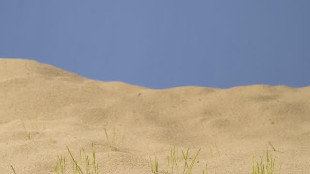 vídeos de stock e filmes b-roll de t/l track across sand and grass growing - germinação