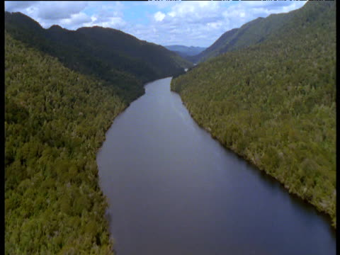 track along gordon river and huon pine tree covered valley, tasmania - wilderness stock videos & royalty-free footage