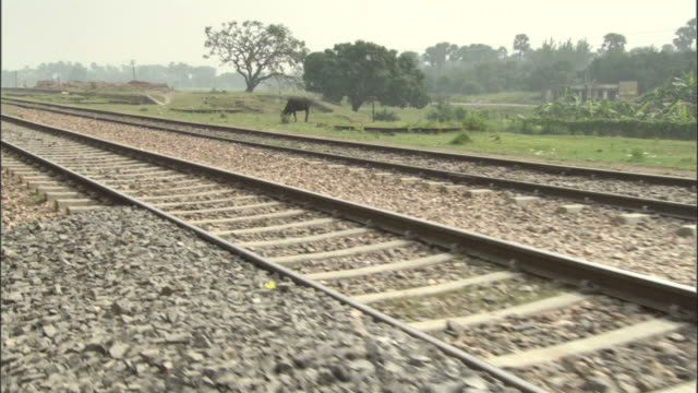 Track along railway track past grazing cow, India Available in HD.