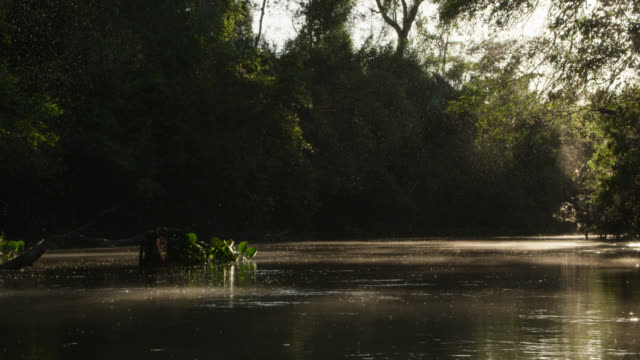 Track along Rio Salobra through cloud of midges.