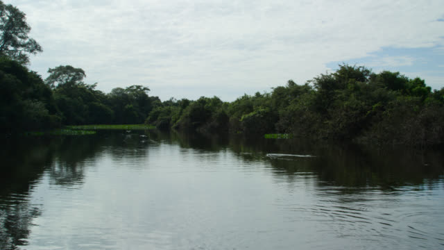 Track along Salobra river flowing through rainforest, cormorants take off from surface of water.