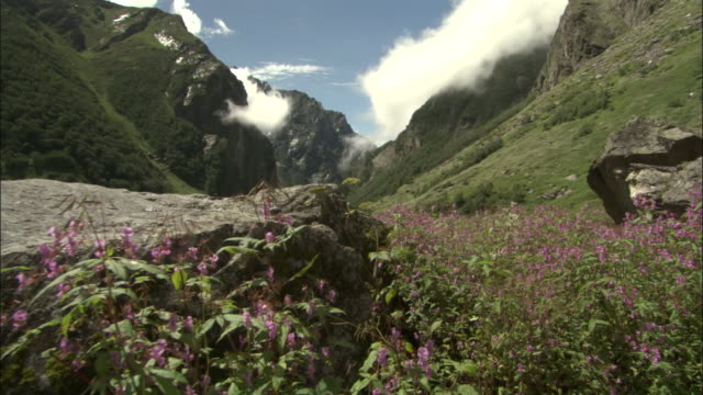 track along valley of flowers, himalayas available in hd. - valley stock videos & royalty-free footage
