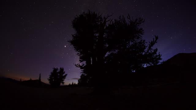tl track around bristlecone pine tree at night, california - durability stock videos & royalty-free footage